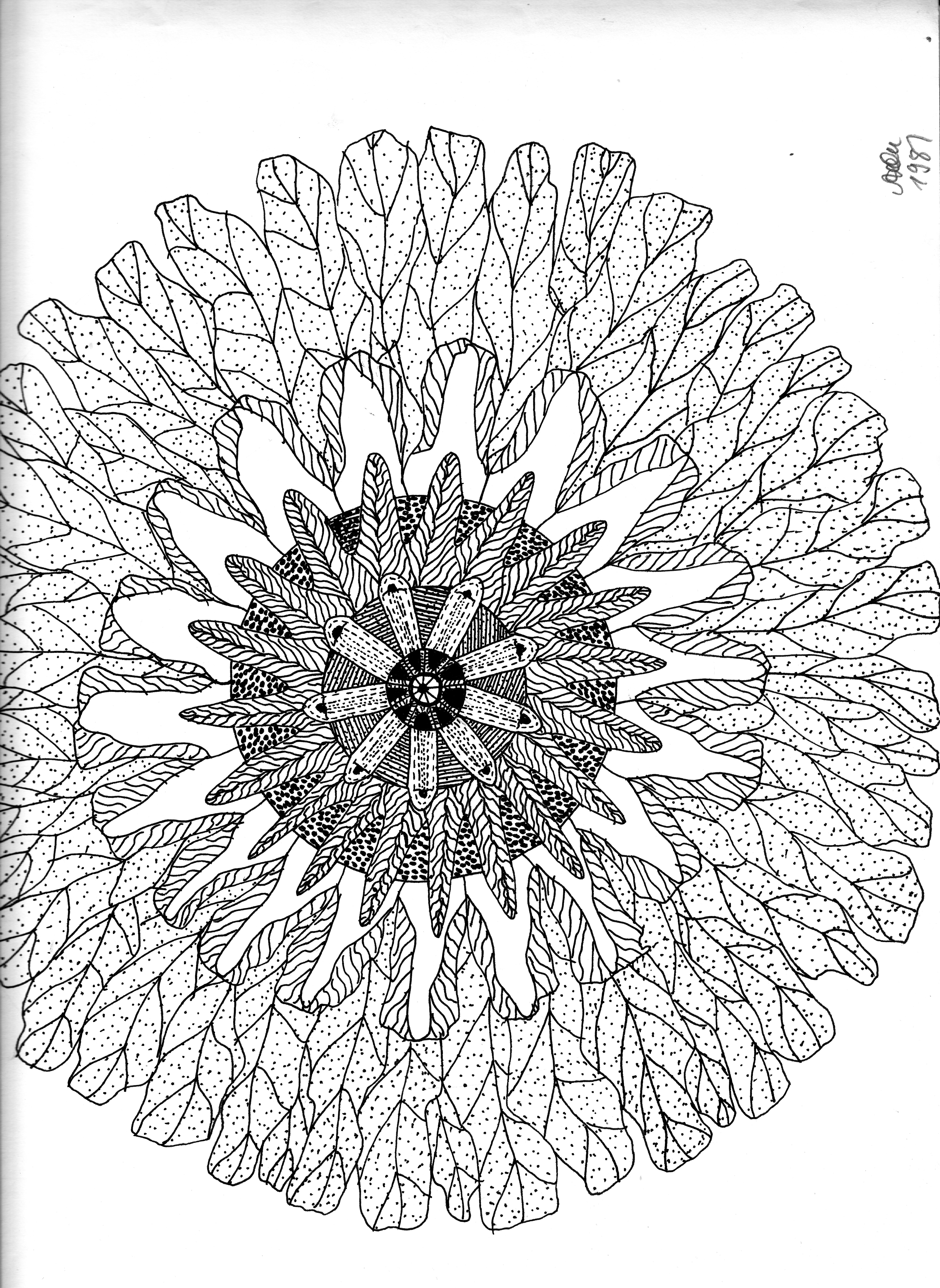 Blütenkopf; Tusche; 1981; imachd.