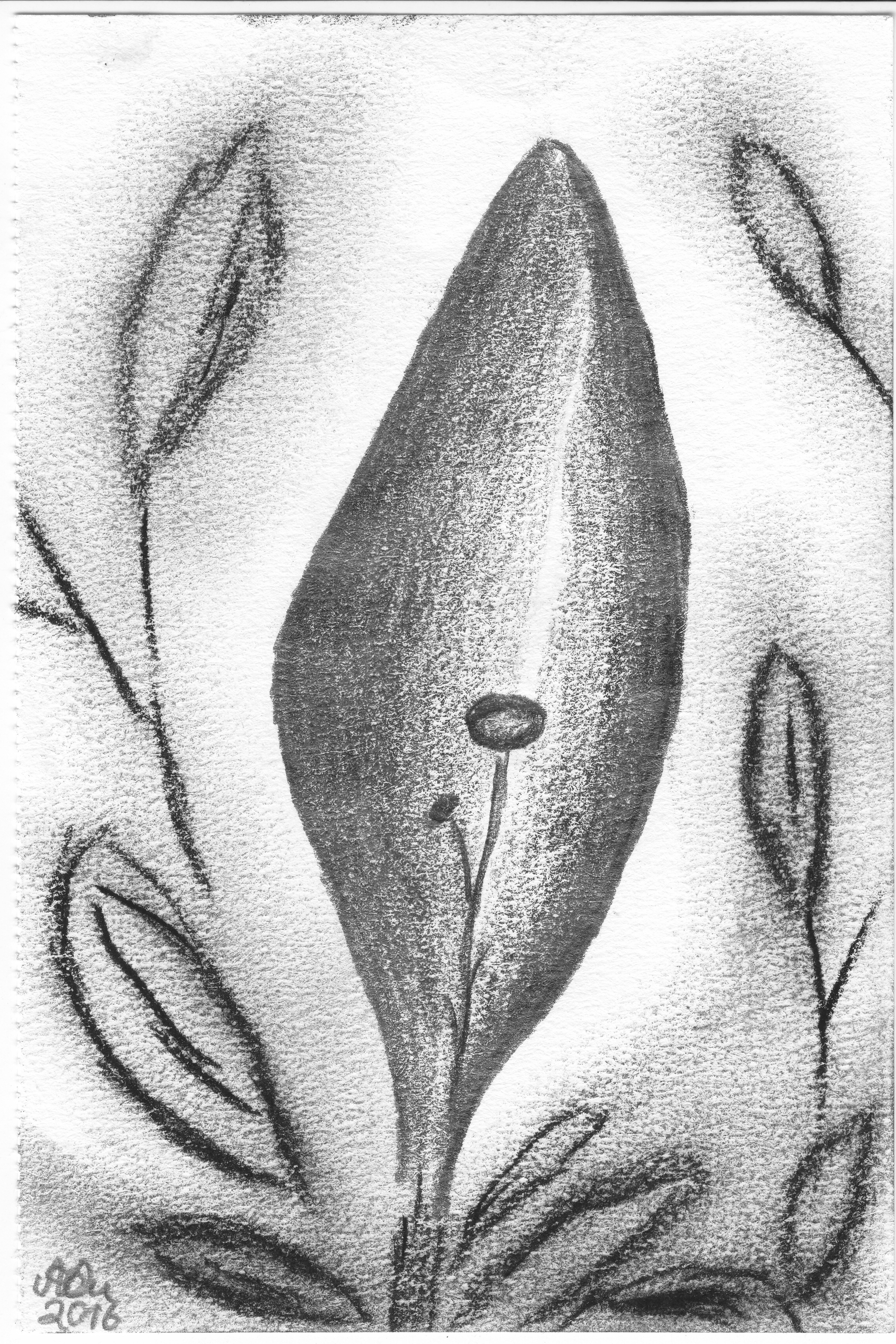 Mamas Garten Variation 2; Bleistift und Kohle; 2016; imachd.
