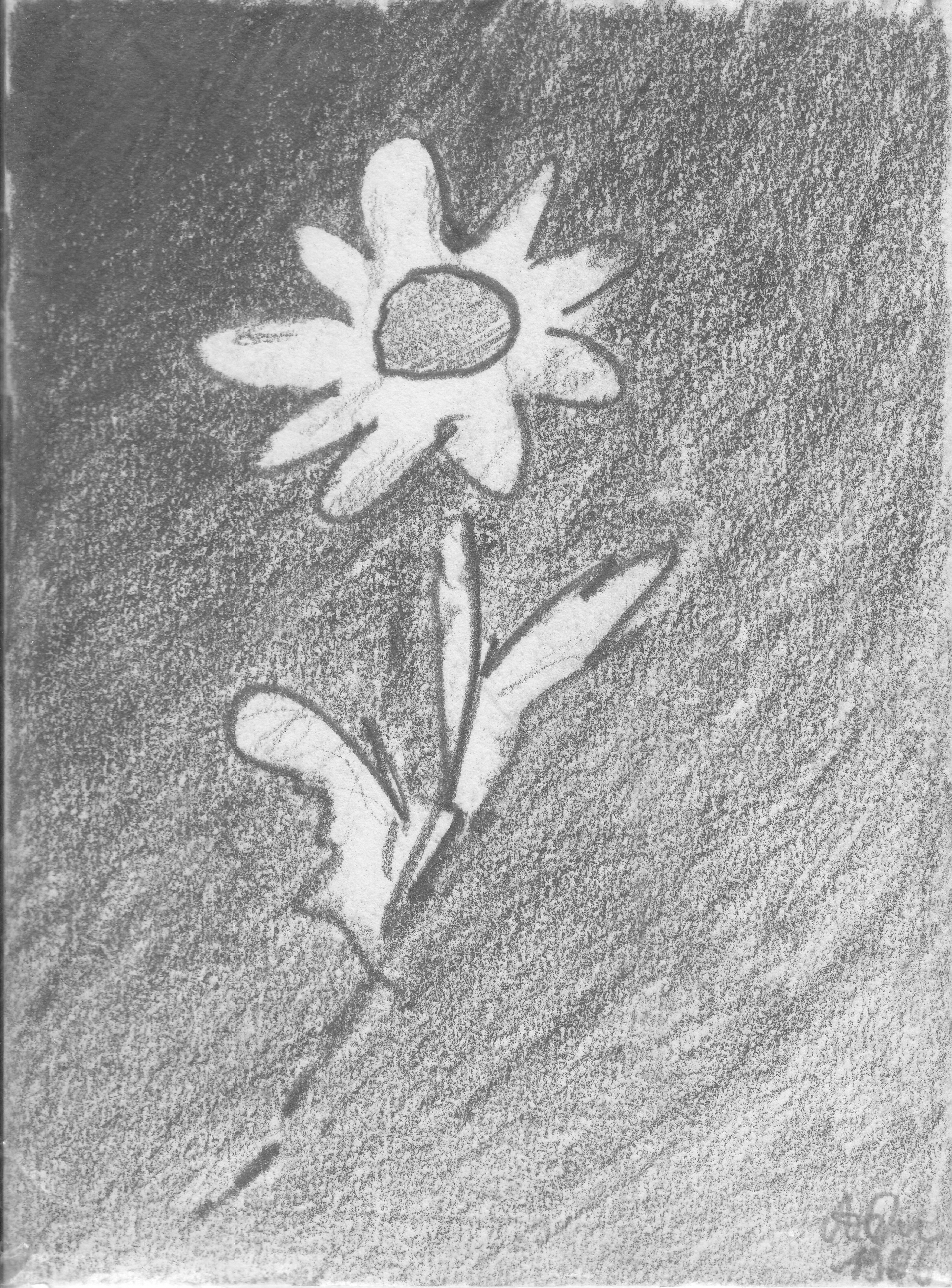 Blume 1; 1986; Graphit; imachd.