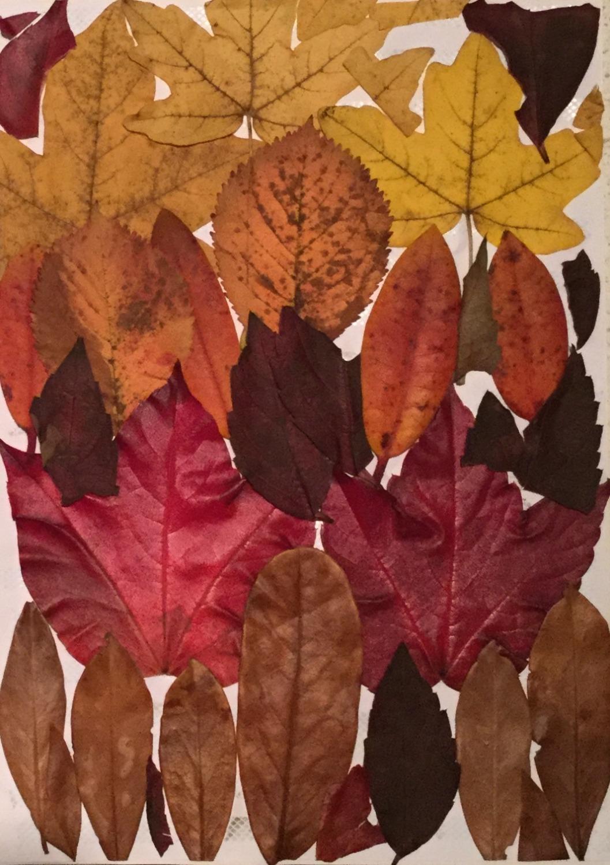 Herbst 2016, imachd.IMG_3_edited