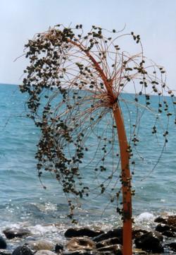 Strandsession Kalabrien 2001_8