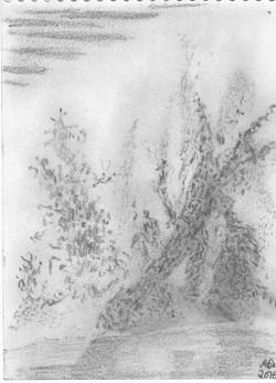 Entwurzelter Baum; 2016; Bleistift; imachd.