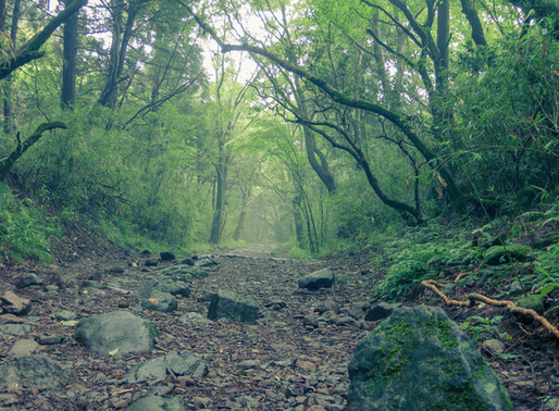 Ochudo Trail Hike Half Day Tour