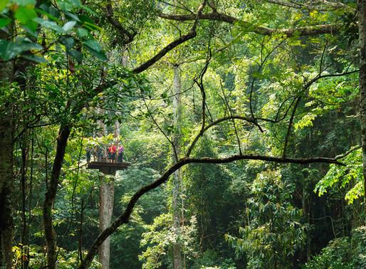 Gibbon Adventure Tour (Rainforest Zipline)