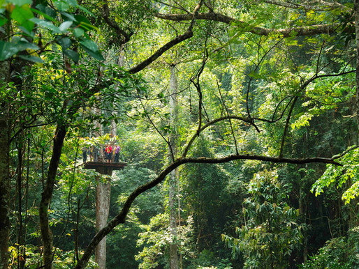 Gibbon Adventure Tour (Rainforest Zipline)