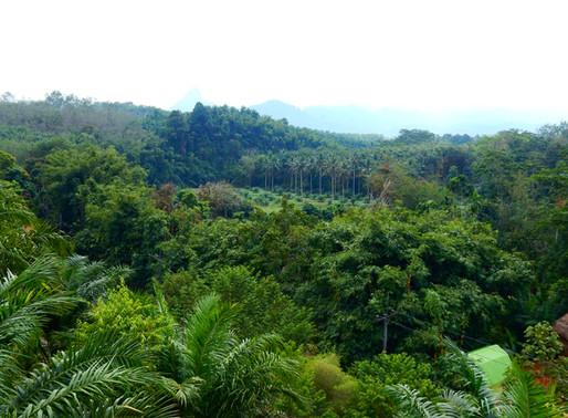 Jungle Trek Half Day at Khao Sok National Park