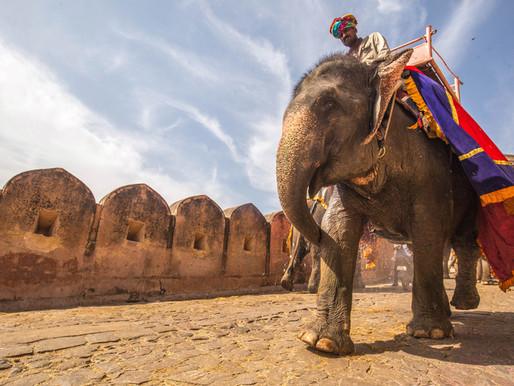 Visit to Elephant Village