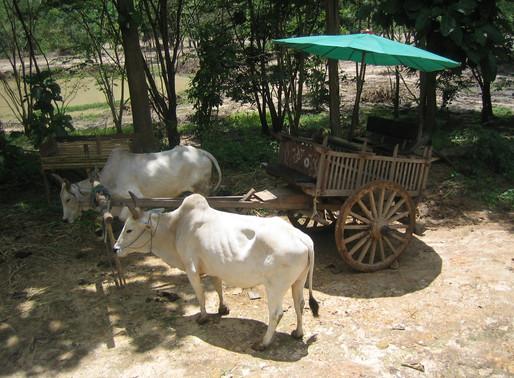 Mae Sai Market & Tachilek Village