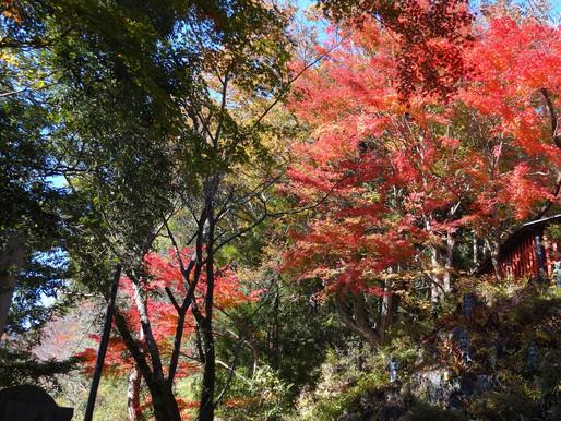 Hike at Mt. Takao - Tokyo
