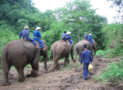 Signature Mahout Experience