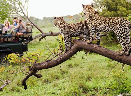 Jhalana Forest Safari