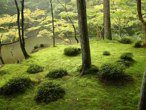 Saihouji Temple / Moss Garden