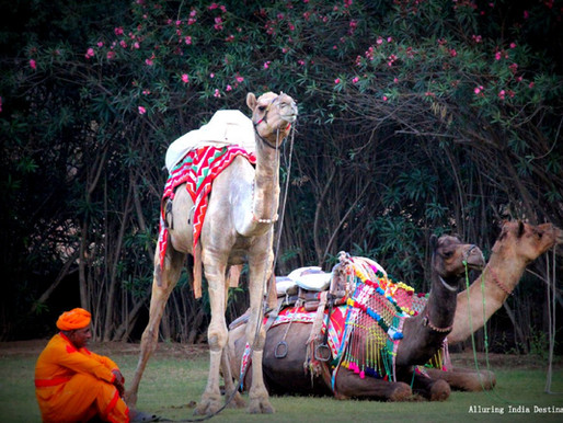 Camel polo match and dinner