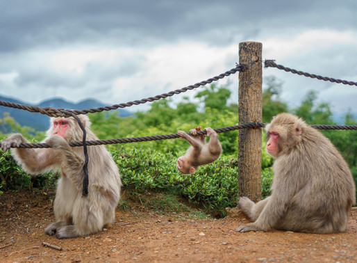 Sagano Monkey Park