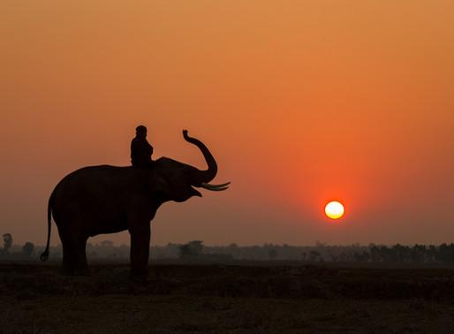 Elephant Sunset Trek
