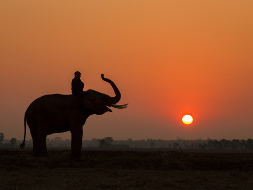 Elephant Sunset Trek