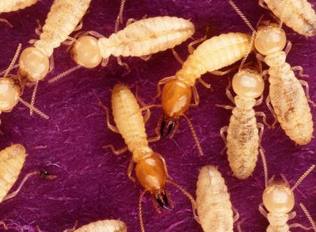 Add a Termite Inspection, Please