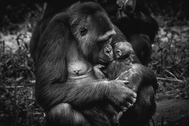 Behind Bars - Bristol Zoo