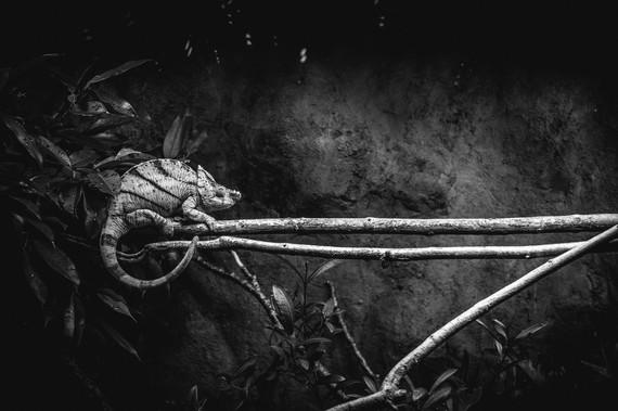 Behind Bars - Chameleon