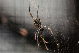 Dread to think what specie of spider this could have been! - Australia