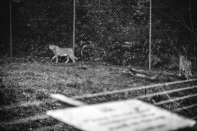 Behind Bars - Dartmoor Zoo