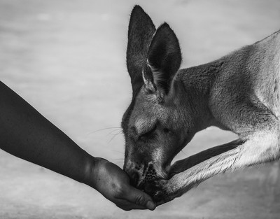 Behind Bars - Australia Zoo