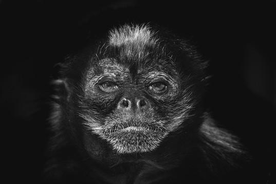 Behind Bars - Newquay Zoo