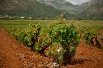 Xalo Valley Vineyards