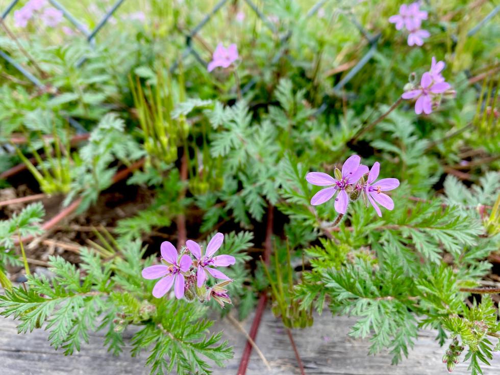 Lovely little meadow flowers.
