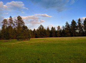 The Meadow to the South in the Summer