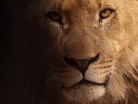 Weg von Angst, hin zu Mut