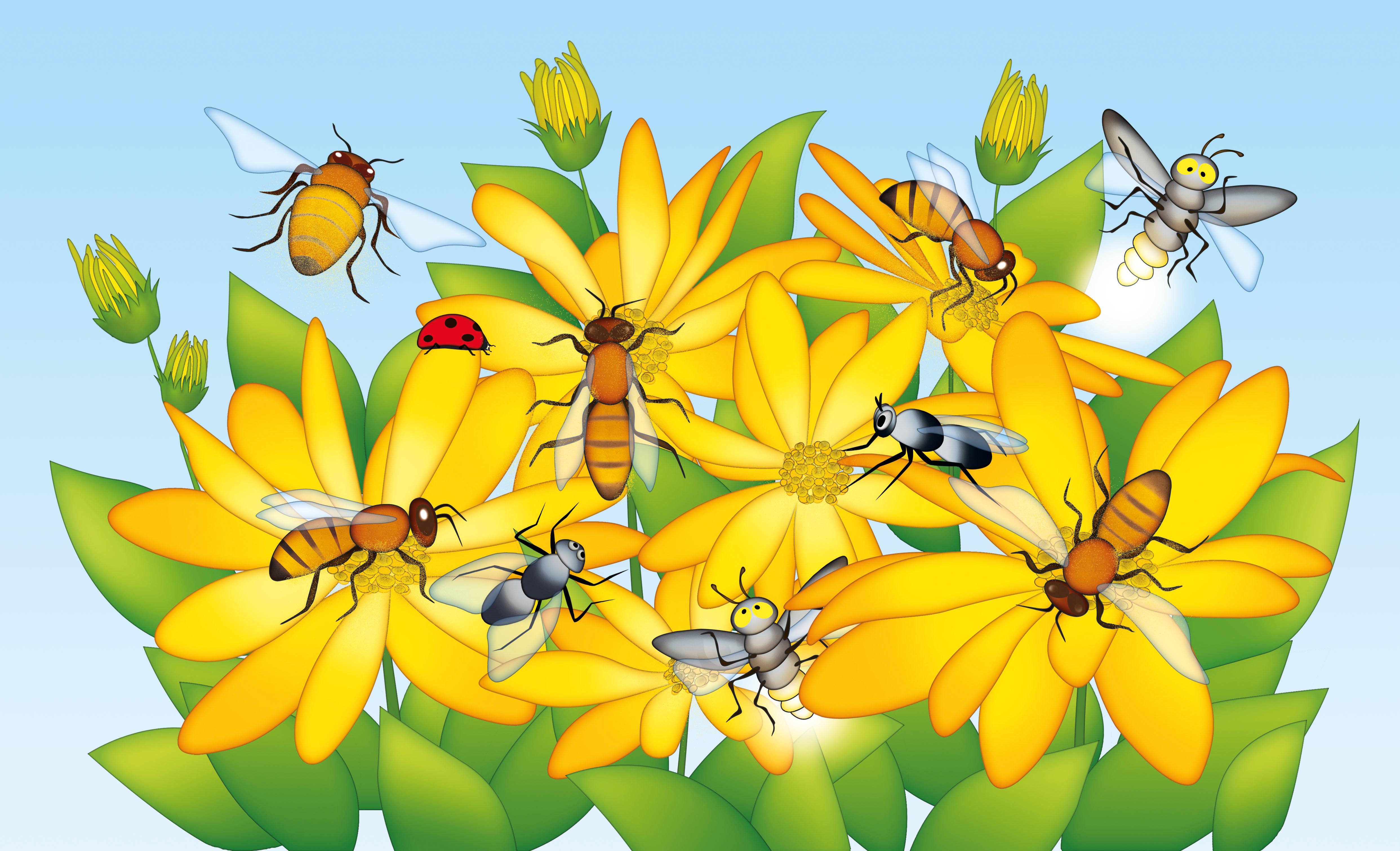 api sui fiori ok