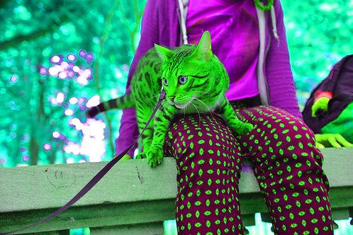 Cat on Lap #4