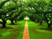 Path in Trees.jpg