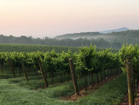 UNCORKING NORTH CAROLINA WINES