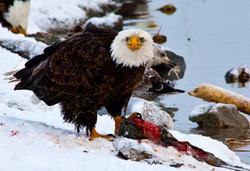 Farmington Eagle 2.jpg