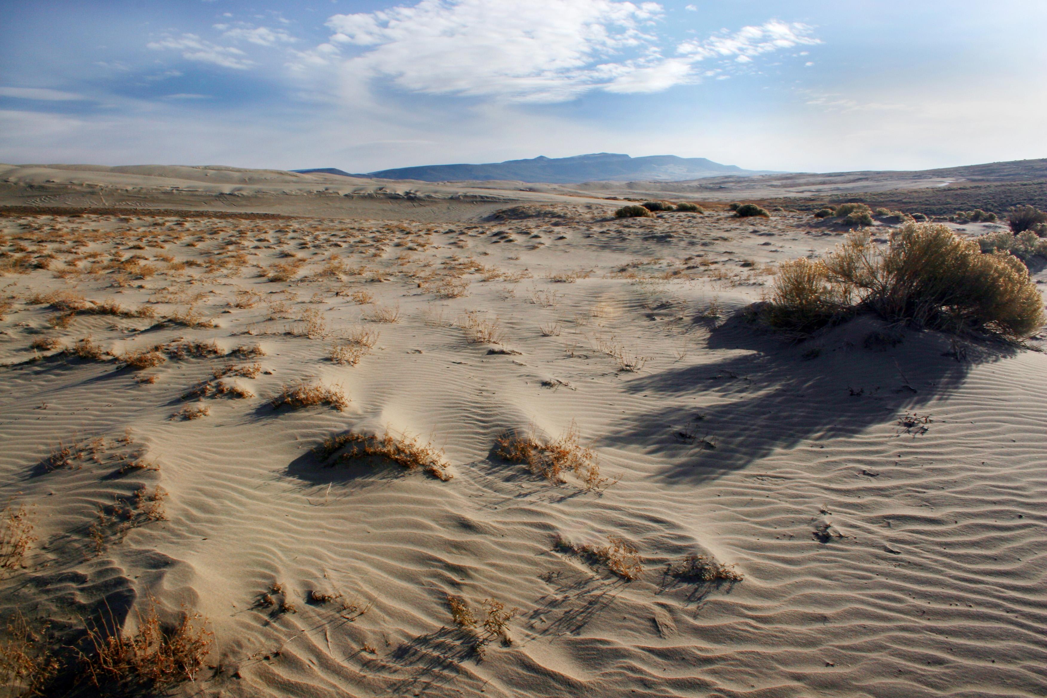 Dunes5.jpg