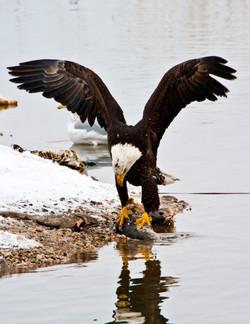 Farmington Eagle 10.jpg