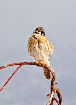 Farmington Bird 1.jpg