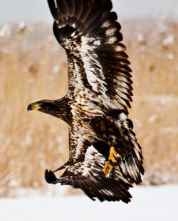 Farmington Eagle 25.jpg