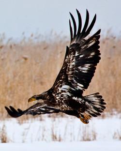 Farmington Eagle 27.jpg