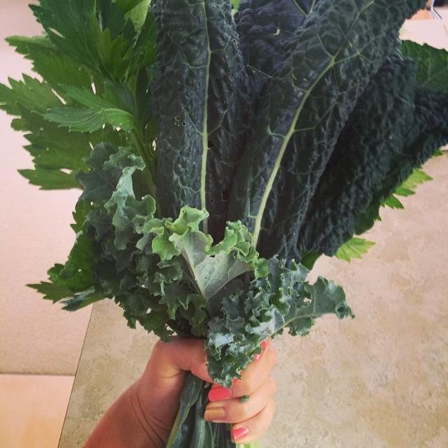 #hegotmeflowers #mygarden #lovesmeback #greenjuice #errday #kaleale #celery