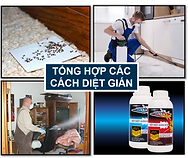 Tong hop diet gian Duc.png