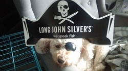 Aarrrgh! This is what we do on a rainy day and the pet sitter has too much time on her hands----Alli