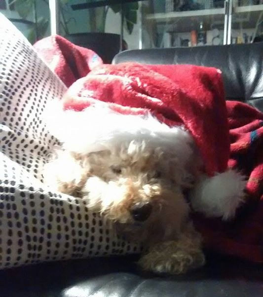 Spending Christmas morning with _Allie-Claus_.._edited