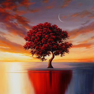 Peaceful Wonder
