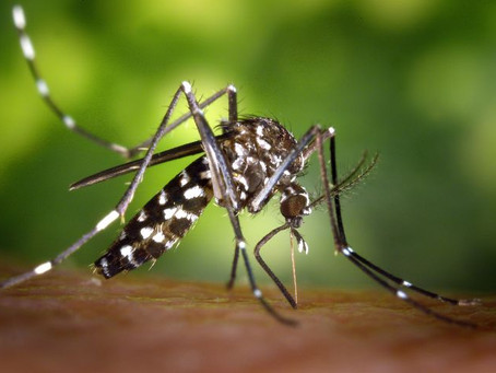 Homeowner Mosquito Tips