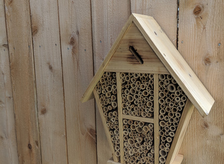 A Bed & Breakfast for Bees