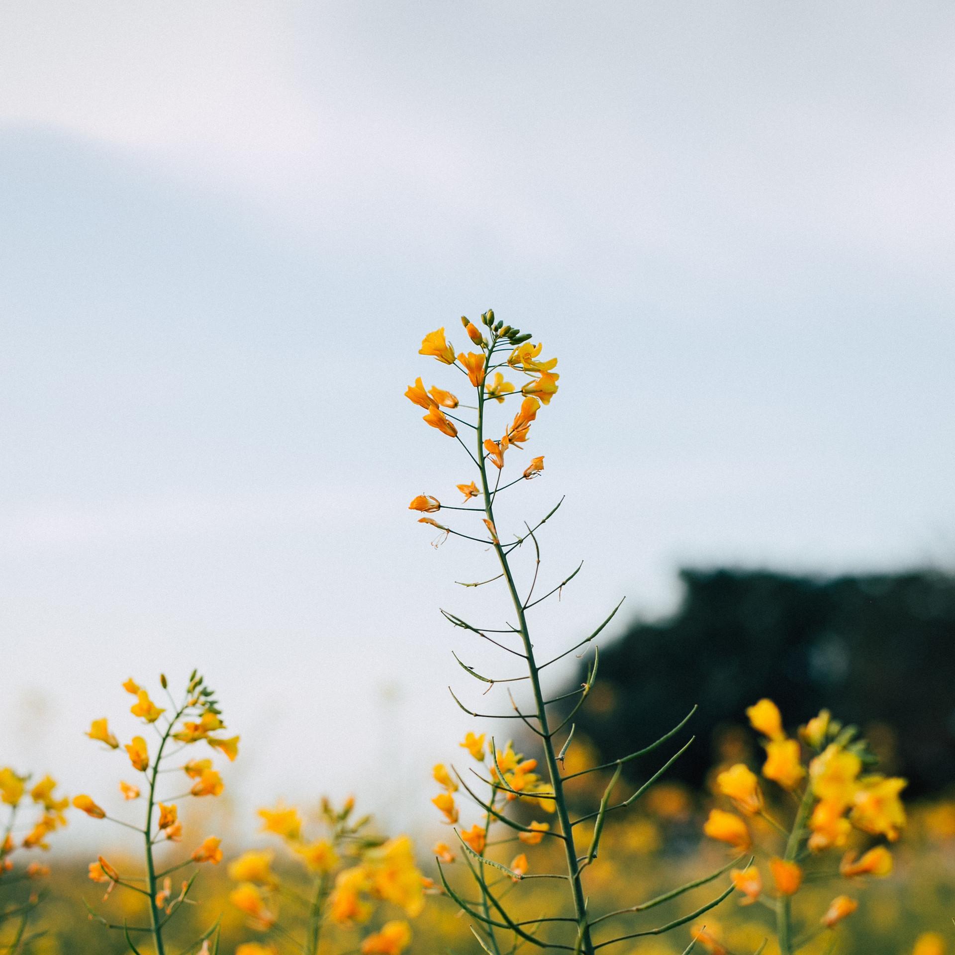 Vårstädning