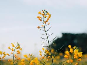 Blühwiese Gut Darß
